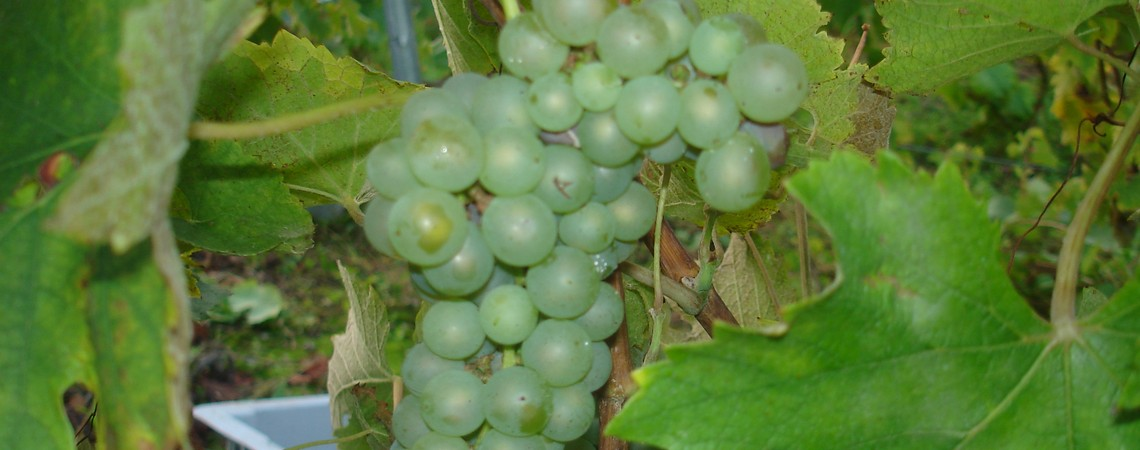 Florent-heritier-vin-savoie2