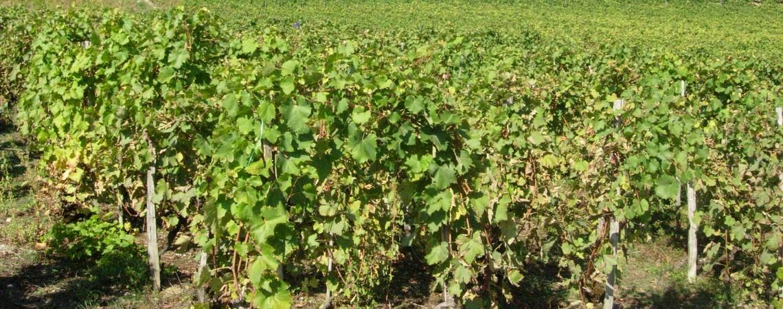 Florent-heritier-vin-savoie5